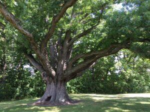 oak-at-sunnybrook